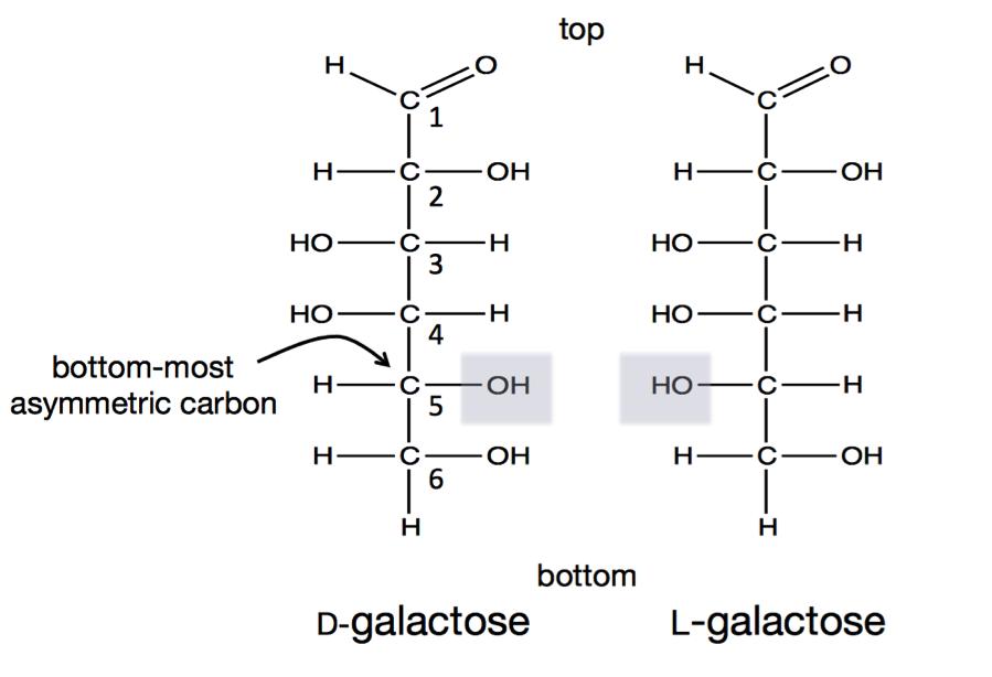 dlgalactose