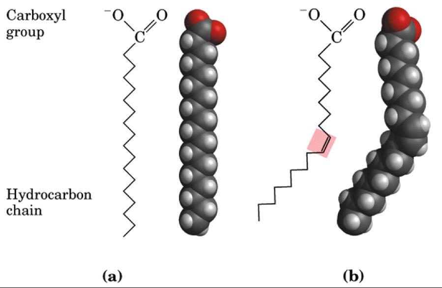 lipid2