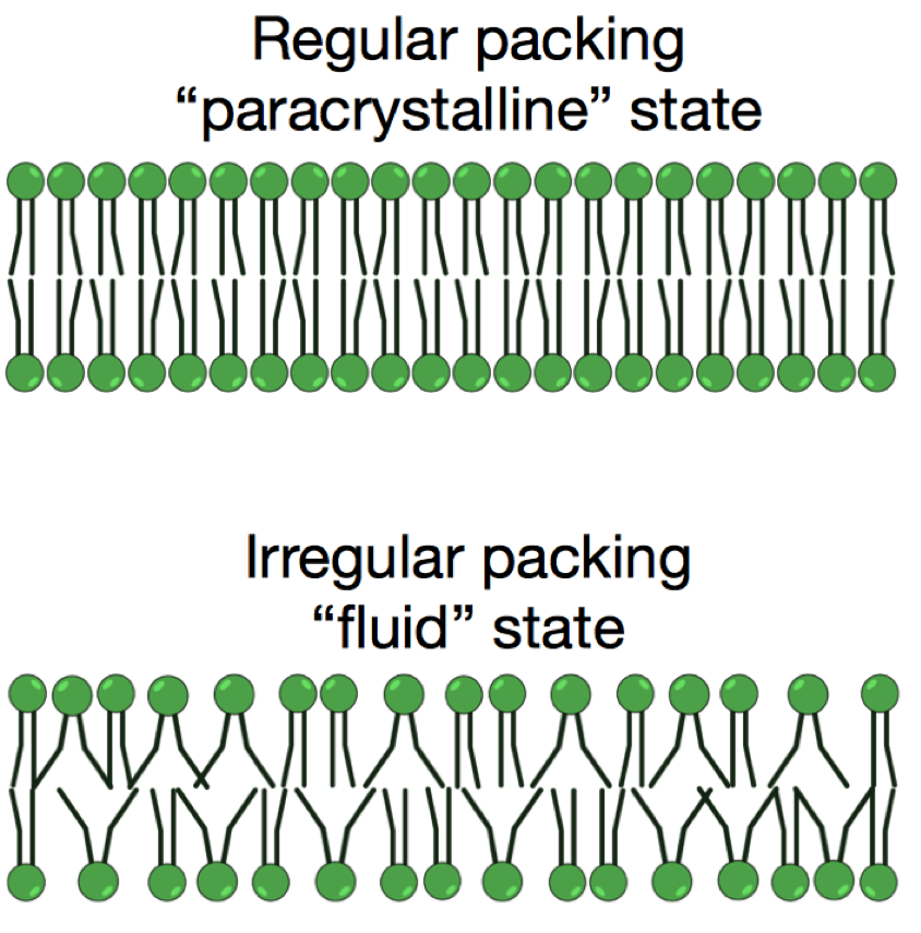 paracrystalline