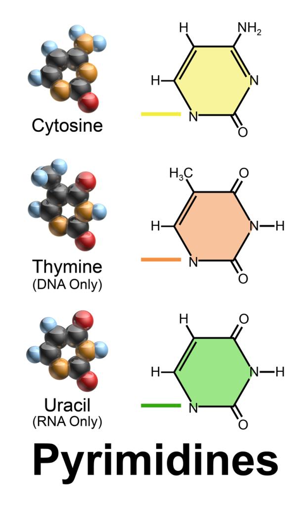 Pyrimidines