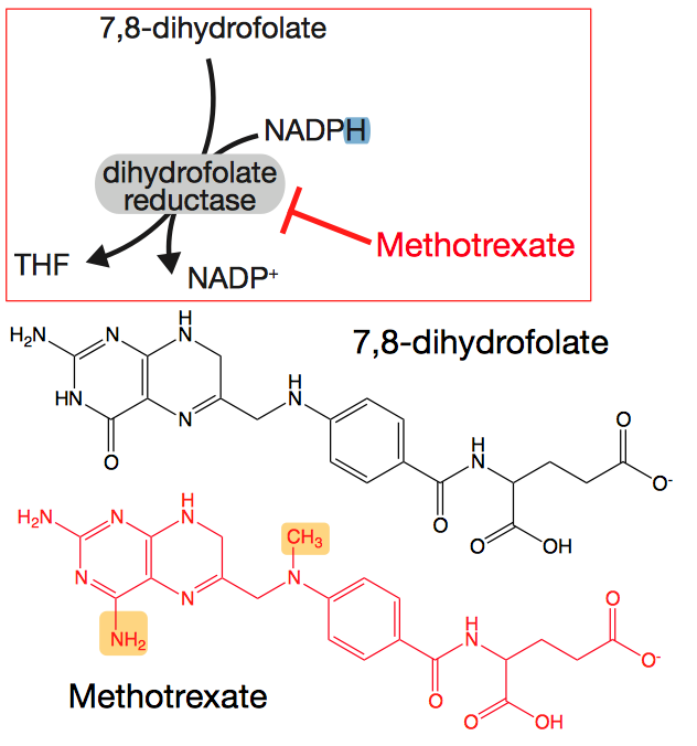 Methotrexate. Image taken from HarvardX/EdX lecture slide. All rights belong to them.