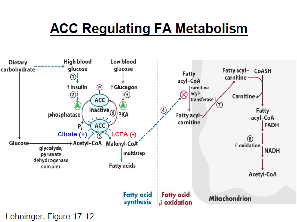 acc_regulating1357697047052